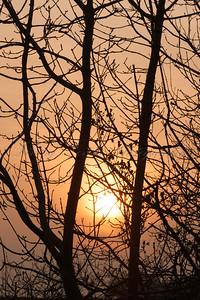_72H2553 - Sunset Through Trees at Charterhouse