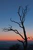 Dead Tree Sky