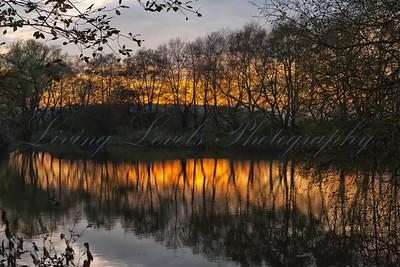 20111120_72H1634 - Sunset Through the Trees at Glastonbury Heath