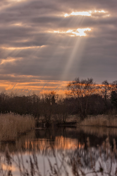 Winter Sunset over Ham Wall reed beds