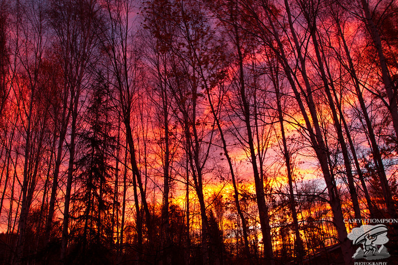 Fall Morning Light - Fairbanks, AK - September 22, 2012