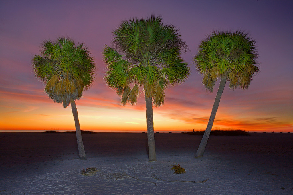 exposure blended 3 photos for this one. One used a flashlight to light the palms at night, the others to capture the sunset colors.