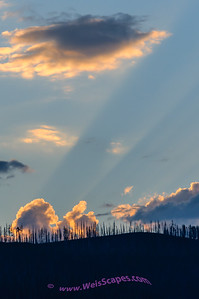 Setting sun thru the burnt out tree line, west shore of Lake MacDonald, Glacier National Park.