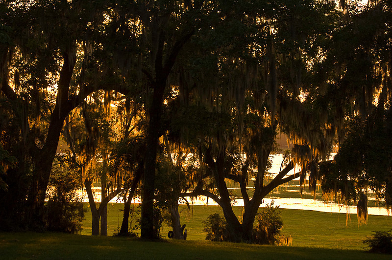 Al and Ashby's backyard, Tallahassee, FL