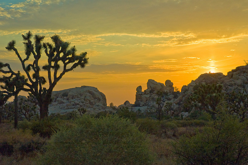 Mid July sunset Joshua Tree National Park, CA