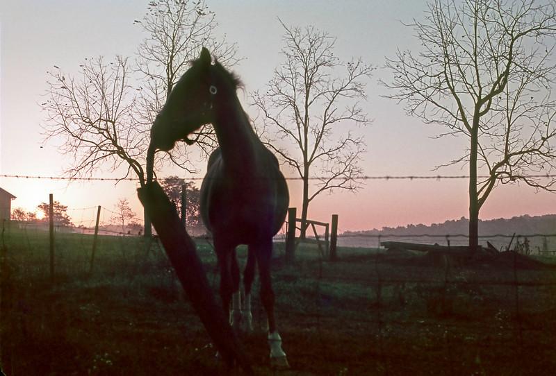 Sunrise with horse somewhere near Gettysburg, PA, mid 70s Kodachrome scan