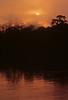Amazonia-Napo River