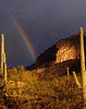 Sunrise rainbow - The morning after an unusual snowfall I hiked to a trail head at dawn. As the sun came up I found about 6 photographers amoung the cactus setting up tripods. This rainbow showed up just as the sun lite the face of the Catalina Mountains