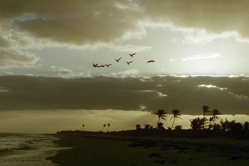 Pelicans of to work at Sunrise