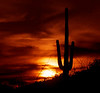 Arizona tourist sunset.  I have found a little hill that gives me a good skyline for sunset shots.