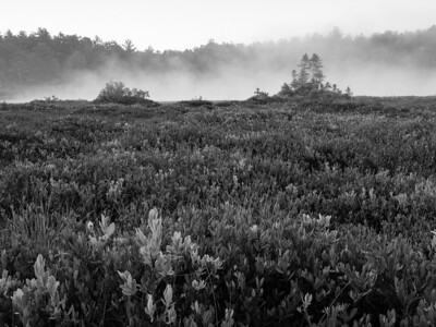 A B&W conversion brings attention to the lovely texture of the bog heath and adds a touch of drama to a peaceful scene.