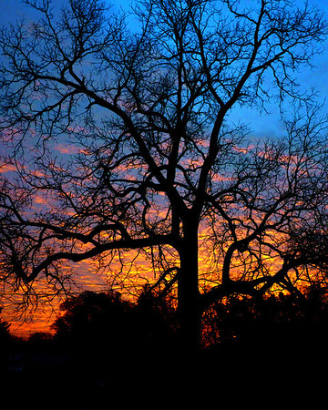 Sunrise in Illinois - Through a leafless Black Walnut Tree