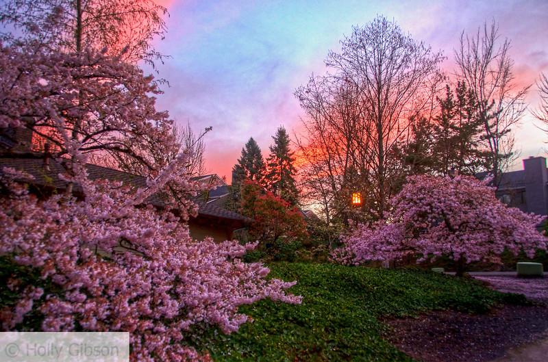 Spring trees at sunrise - 160