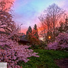 Spring trees at sunrise - 160