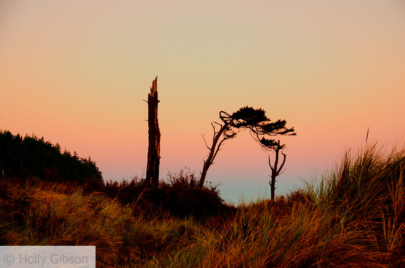Scrub trees at sunrise- Ft. Worden State Park - 195