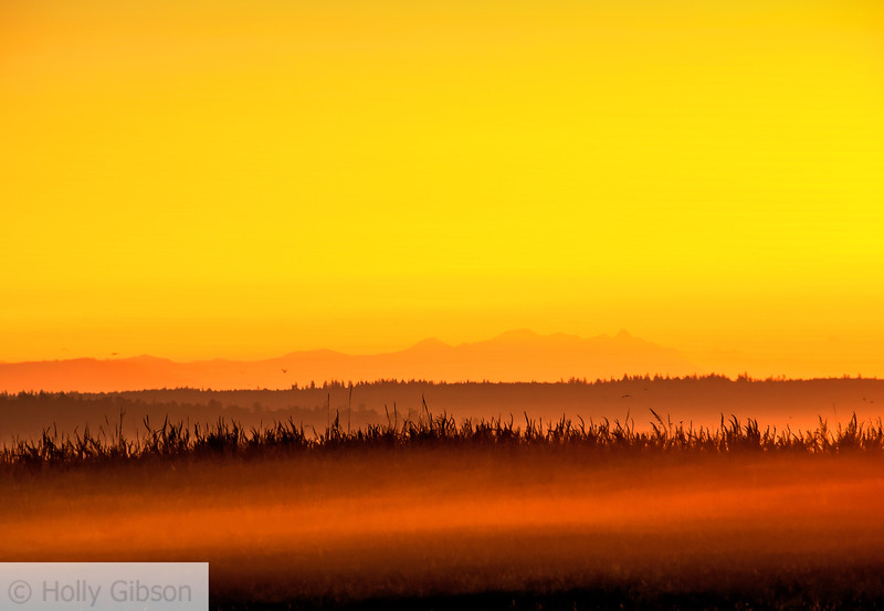 Sunrise and patch of fog - Ft. Morden State Park - 204