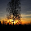 Sunrise behind willow - 52