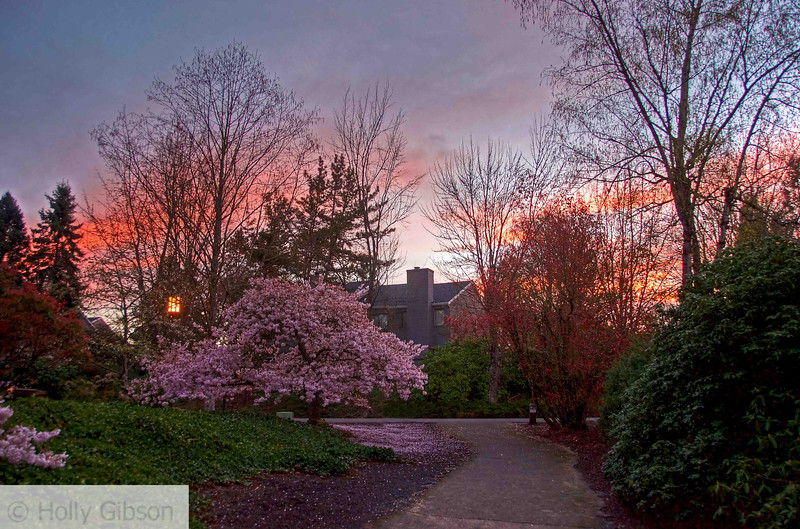Spring trees at sunrise - 159