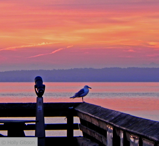 Seagull taking in the sunrise - 80