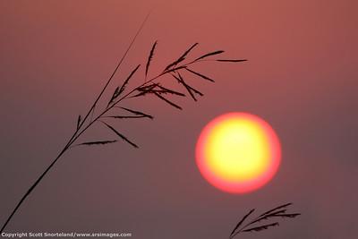 Sun out of focus, Dune Road Hampton Bays Long Island