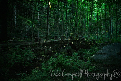 Fireflies at the Troll Bridge