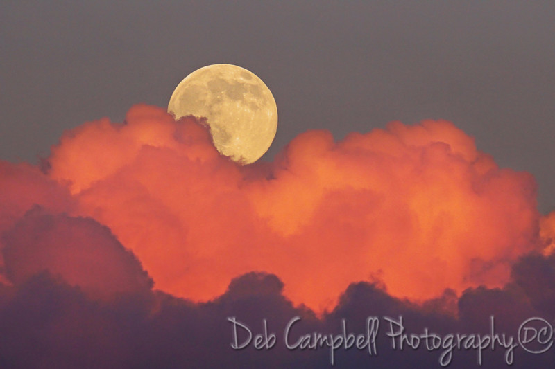 "Cotton Candy Moon<br /> The July ""Supermoon"" rising from behind glowing pink clouds.<br /> Foothills Parkway West<br /> Great Smoky Mountains"