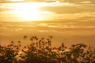 Sunrise and Coneflowers
