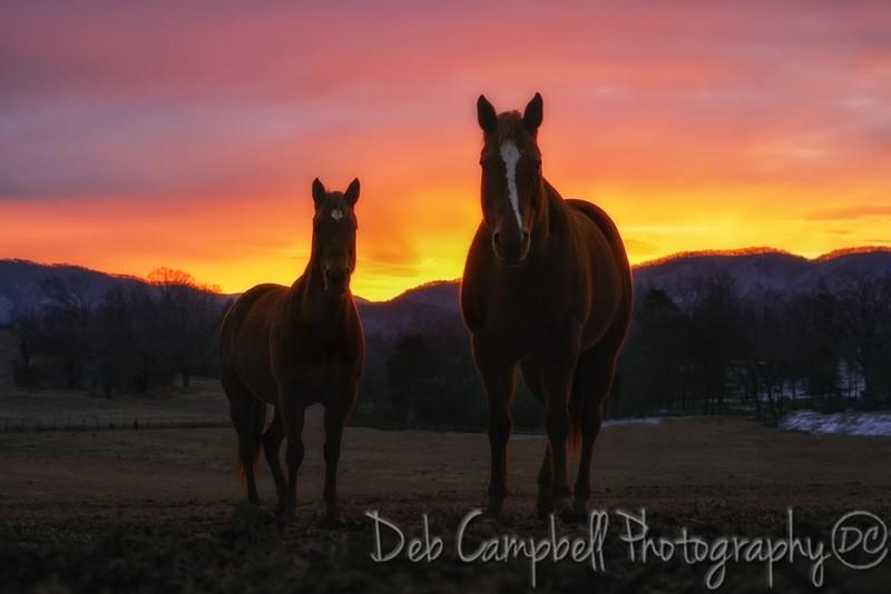Sunrise with Sonny and Faith