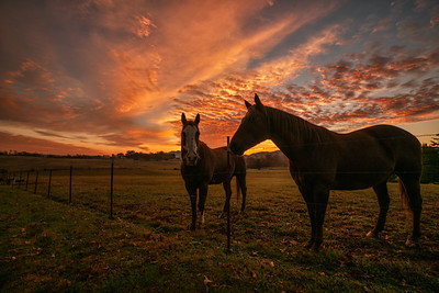 Sunrise with Sonny and Cash