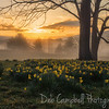 Sunrise at the Daffodil Patch