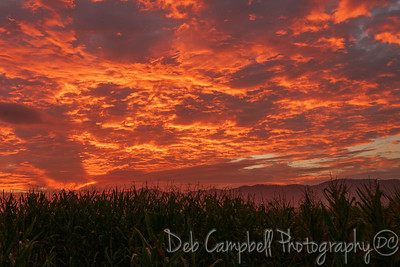 Sunrise at the Cornfield