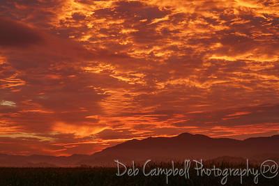 Sunrise at the Cornfield