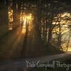 Sunbeams on the loop road