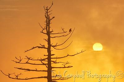 Sunrise at Clingmans