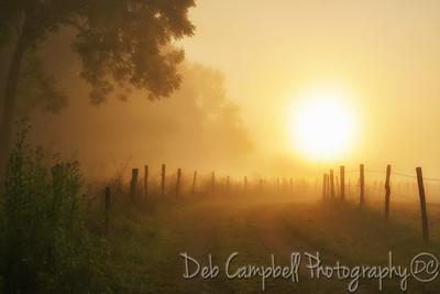 Sunrise on the Grassy Road