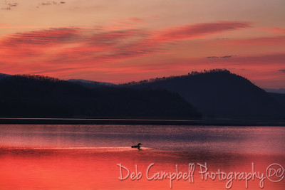 Common Loon at Sunrise
