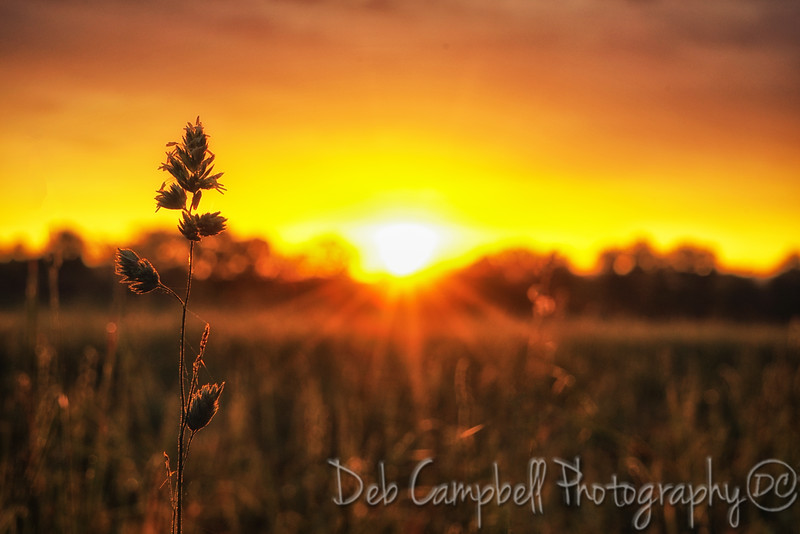 Sunrise in the Country3