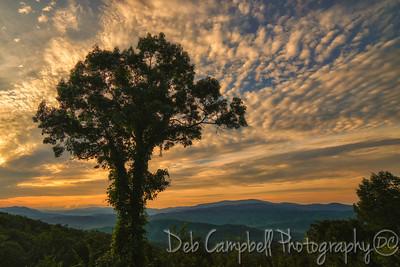 Sunrise at the Tree