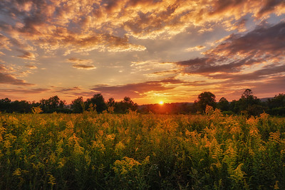 Goldenrod Sunset