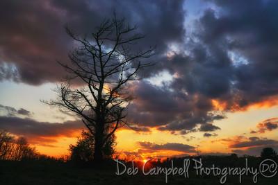 Sunset at Royal Oaks