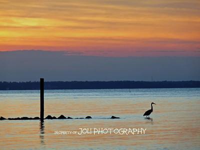 """Great Blue Heron on the Rocks"""