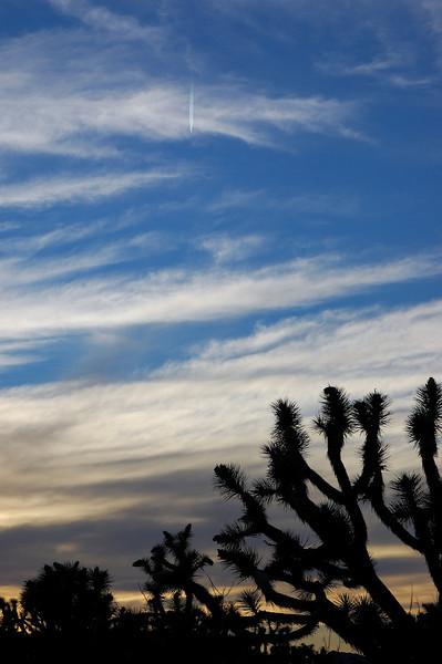 Joshua Tree National Forrest, AZ