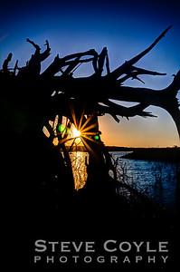 Stumpy Sunset