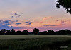 Sunset across the fields - Tunstall 9:15pm on 6 July 2014