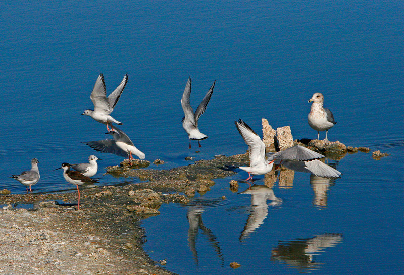 Shorebirds and sea gulls