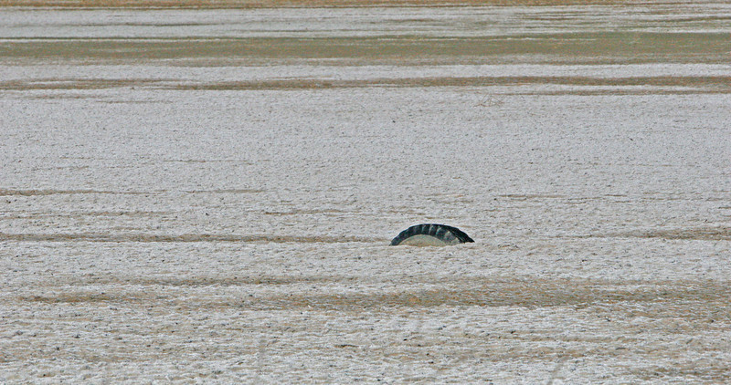 A tire in a salt flat is just about buried in the silt