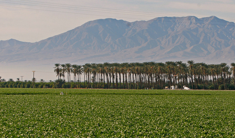 the water that used to go to the Salton sea grows vegtables