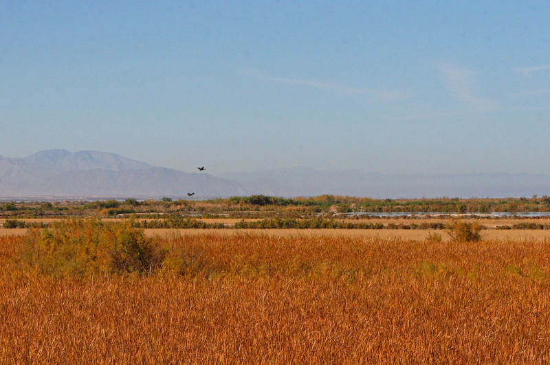 The south end includes the Sony Bono National Wildlife Refuge that contains some nice marshes