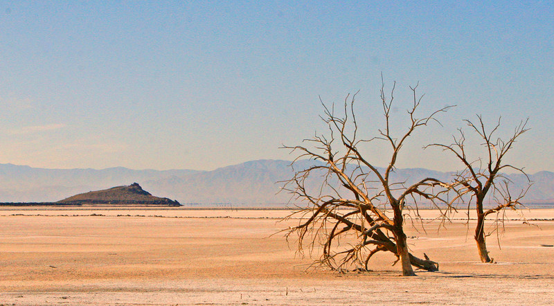A dying tree on the edge of the salt falts