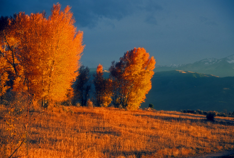 Fall colors on Missouri Heights with snow coming on Sopris  Colorado